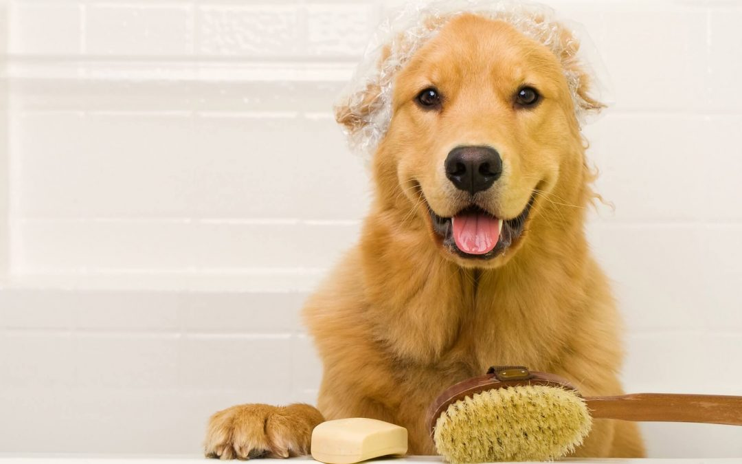 What happens if I don't groom my dog – does it really matter?
